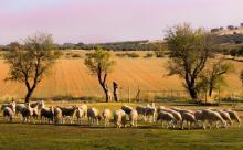 """Publicación Artículo """"Factors Affecting Levels of Airborne Bacteria in Dairy Farms: A Review"""" -  (Quintana, A.R. et al.) - Animals"""