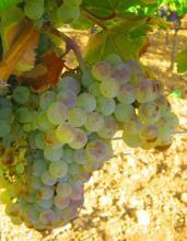 Castilla-La Mancha, en busca de las uvas perdidas